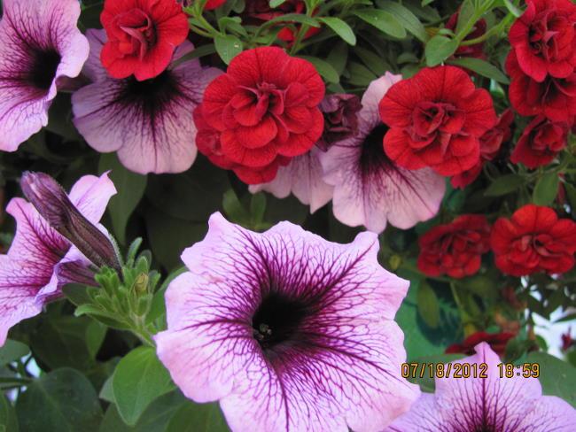 floraldisplays3